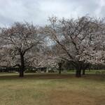 タイ屋台 999 -  silent spring @ 砧公園    例年はこの下にゴザが敷かれびっしり花見でひしめいているところ、、、。