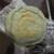 天神餅 - 料理写真:天神餅 よもぎ餅 120円 (2020.3)
