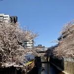BISTRO INOCCHI - 桜は満開にはまだ早かったです