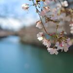128607469 - 大岡川の桜