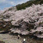 ダイコクバーガー - 和らぎの道の桜