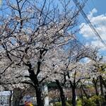128818634 - 桜の木が並んでるー