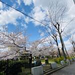 128818675 - 桜の木