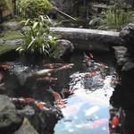 加賀家 - 錦鯉が泳ぐ日本庭園
