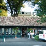 カフェ・ミケランジェロ - 店舗外観。シンボルとも言えるでっかいケヤキ(樹齢300年とか)も見えますね。