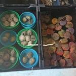 竹崎海産 - 貝類