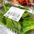 真庭市場 - 料理写真:「アイスプラント」