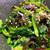 真庭市場 - 料理写真:クレソンと日高昆布のお浸し