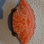 pesceco