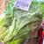 真庭市場 - 料理写真:リーフレタス
