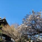 130071885 - 善通寺の桜です(*˘人˘*)2020年3月初旬