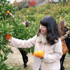 蒲郡オレンジパーク - メイン写真: