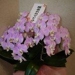 知味笑龍 深澤ラーメン - 綺麗な胡蝶蘭