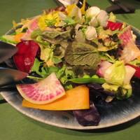 炭火焼きステーキ灰屋-お野菜のサラダオードブル!