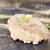 鮨懐石 みどり - 料理写真:生シラス