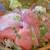 千魚 - 料理写真:日替海鮮丼 980円
