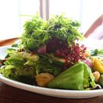 131151574 - 農園野菜のサラダ
