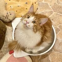 キャットカフェ てまりのおしろ-猫鍋じゃじゃ丸