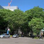 日本料理 e. - 新緑の青葉通り