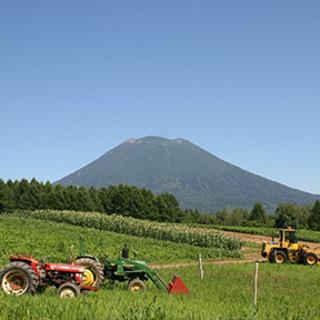 北海道と丹波・篠山にある直営ファームなどから届く新鮮野菜