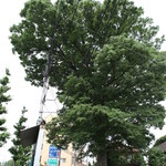びっくりドンキー - 大きな木が目印?