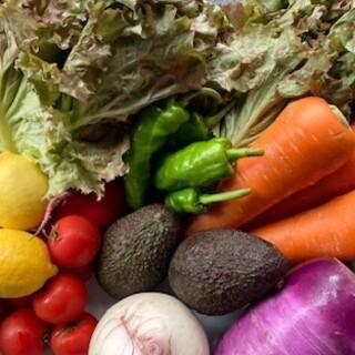 旬を楽しむ新鮮な三浦野菜♪契約農園から直送