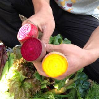 産地直送の旬の野菜が楽しめる!
