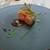 マレッタ - 四元豚のグリッリア