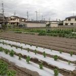 大阪産(もん)料理 空 - バジルをたっぷり使うから大村さんちのバジルソースは最高です。