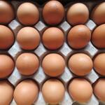 卵の里  地黄卵 - 20個整列