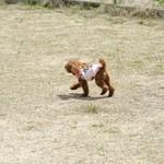 13340974 - この時は犬が少なかったです。