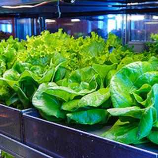 野菜へのこだわりは自家栽培に特殊冷蔵庫で鮮度抜群
