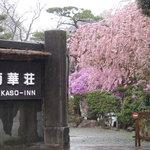1347313 - 桜満開 2008年4月