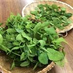 ベジモア ガーデン - 無農薬ミント