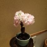 鮨 すがま  - ちょっとしたことですが、お花で季節の演出とかっステキですネェ♪(´ε` )