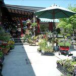 エソラ - お庭のようなガーデニングショップ
