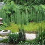 菊乃井 - この部屋の庭