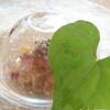 京口町 てるい - 料理写真:雲丹 山芋 出汁ジュレ