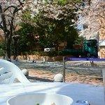M Cafe de Chaya - 桜いっぱいのオープンカフェ
