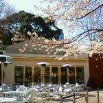 M Cafe de Chaya - 桜が五分咲きの頃のお店概観