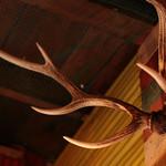 米とサーカス - 鹿の角のディスプレイ