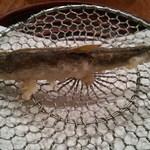 Tempurakappouusagi - 泳いでる!稚鮎の天ぷら