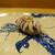 鮨旬美西川 - 料理写真:げそ生姜、むしろ事らの方が美味しいという不思議