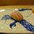 鮨旬美西川 - 料理写真:甘エビ、うまみが濃厚
