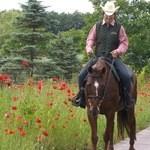 13708941 - 空港から約30分 ノーザンホースパーク お花畑の中を馬がお散歩♪