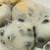 出町ふたば - 料理写真:きな粉掛かっているのが栗餅、これ以外に豆餅ふたつは別包。