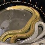 137209302 - 黄色みがかった鰻様は宍道湖の天然 鼠色の方は三河一色の養殖鰻様 大きさもかなり違います!