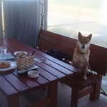 BISTRO WAKU2 - ペット同伴可のテラス席