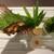 鮎知 - 料理写真:鮎の山椒焼き