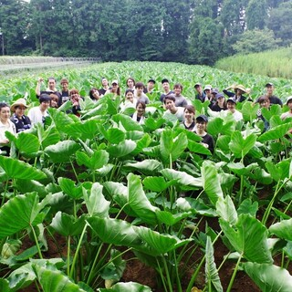 千葉県の自社農場で毎朝収穫した無農薬・無化学肥料のお野菜!